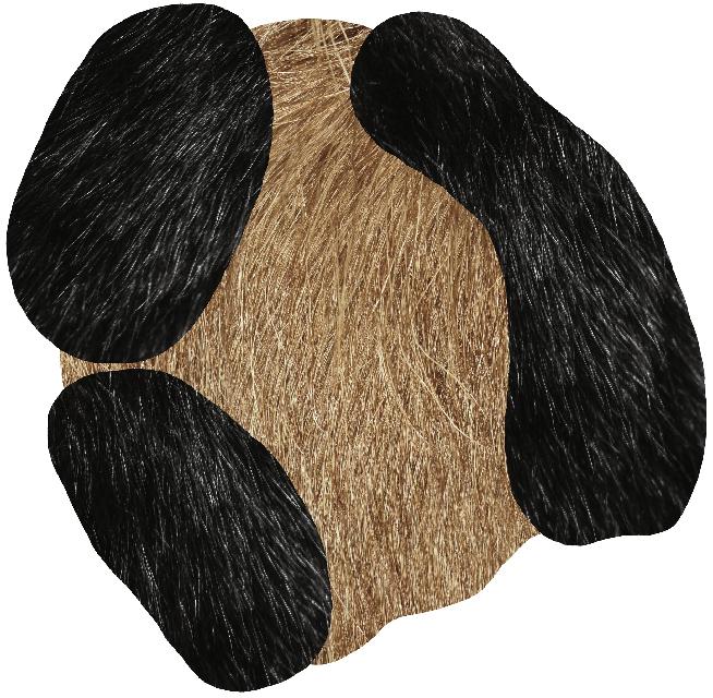 Web_Moooi Carpets Bearded Leopard 2 2018