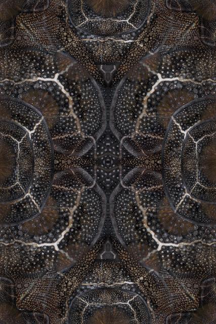 Web_Moooi Carpets Blooming Seadragon 2018